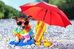 The Best Umbrellas for Dogs