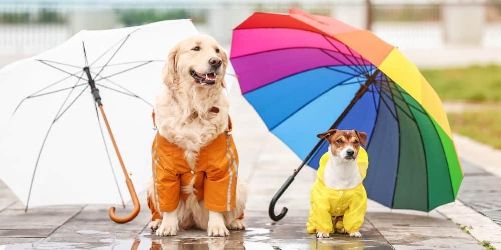 dogs under umbrella