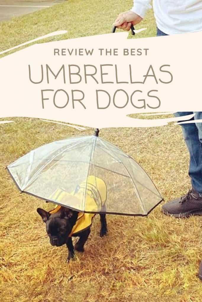 The Best Umbrellas for Dogs - shoppy.dog